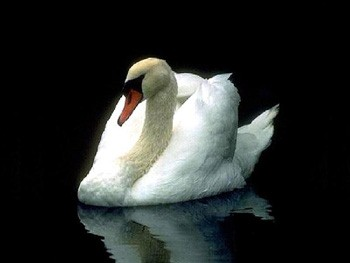 With the grace of a swan.